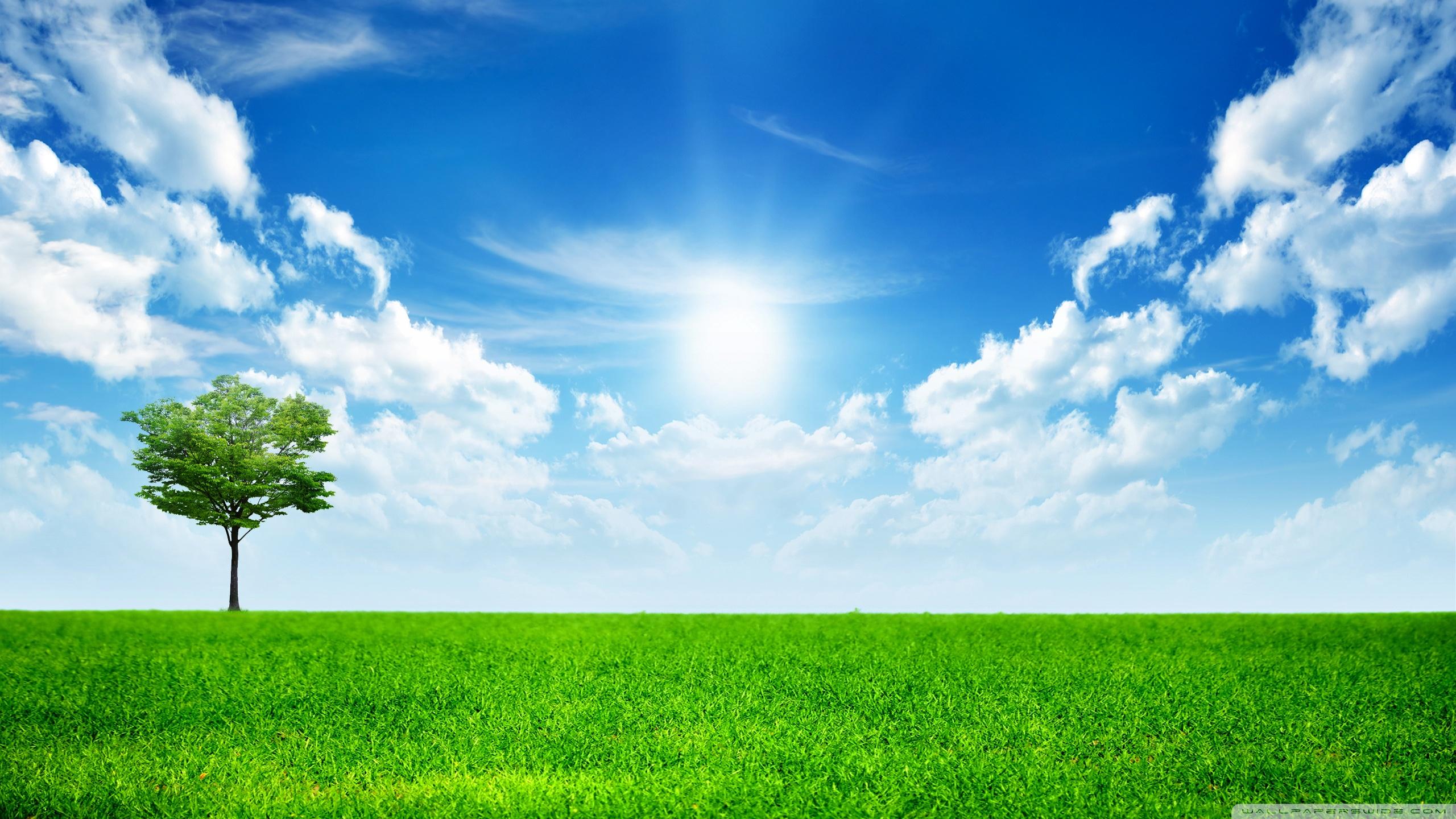 green_nature-wallpaper-2560x1440.jpg