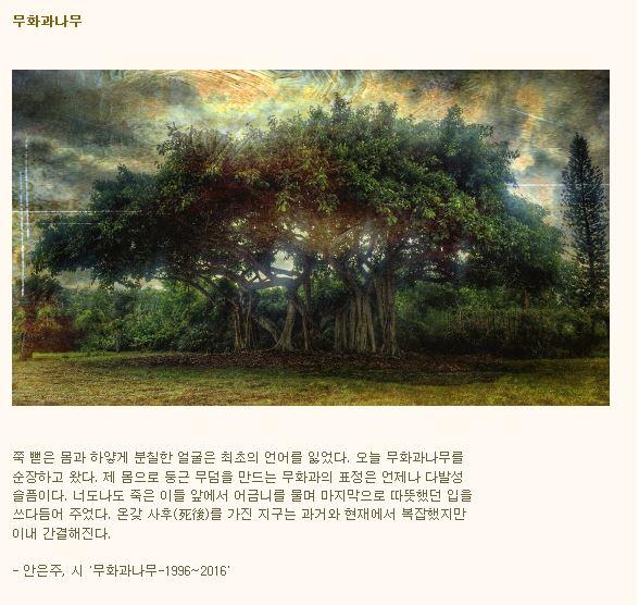 무화과나무.JPG