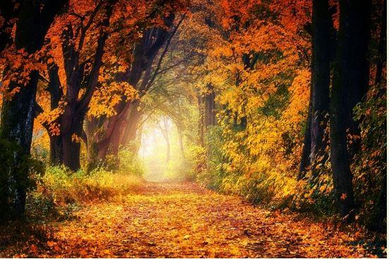 가을 숲.JPG