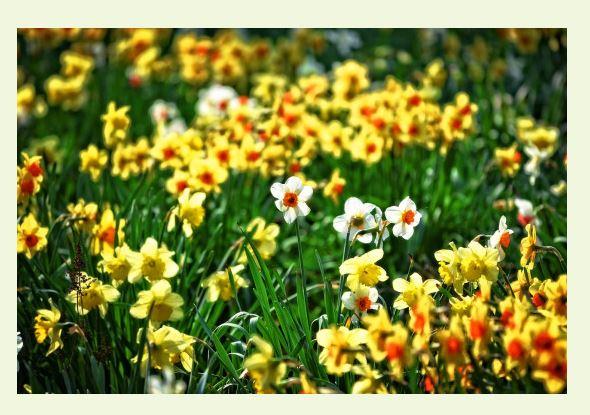 풀과 꽃.JPG