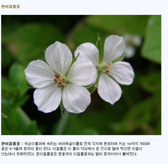 흰이질풀꽃.JPG