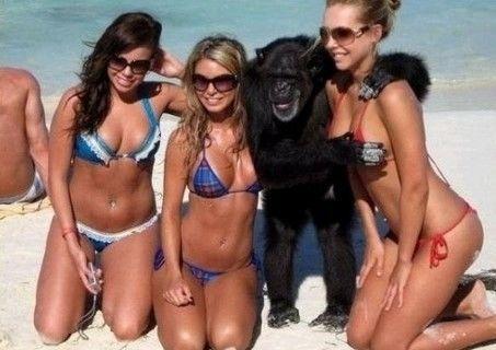 가슴에 집착하는 변태 원숭이들7.JPEG