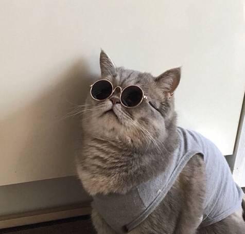 경상도에서 고양이를 부르는 말2.jpg