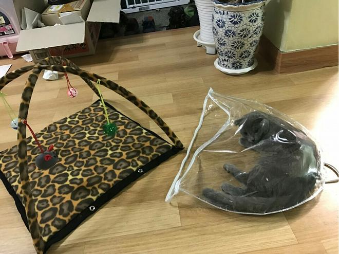 고양이 텐트2.jpg