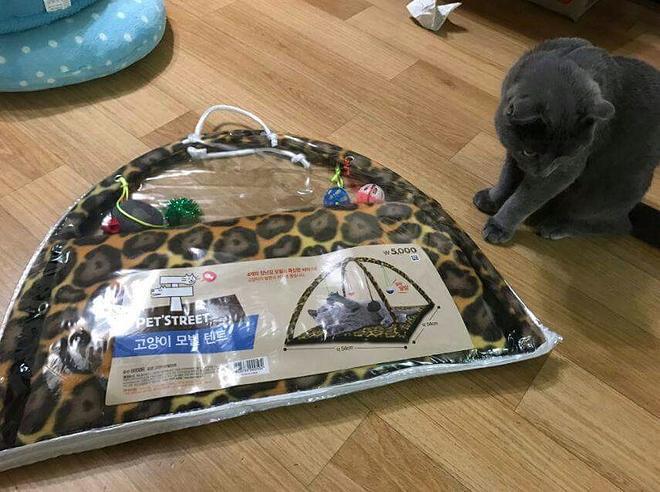 고양이 텐트.jpg