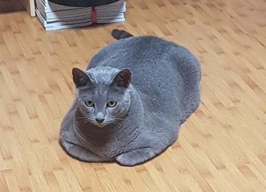 고양이 집 이상과 현실4.jpg