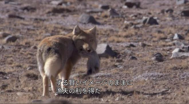 곰엔나사이3.jpg