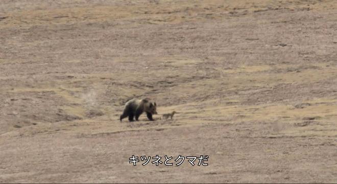 곰엔나사이1.jpg