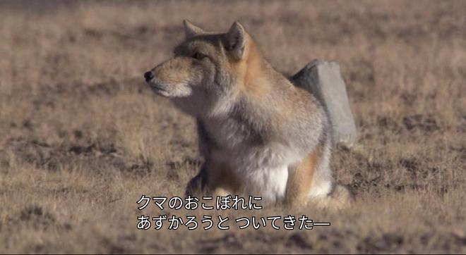 곰엔나사이2.jpg