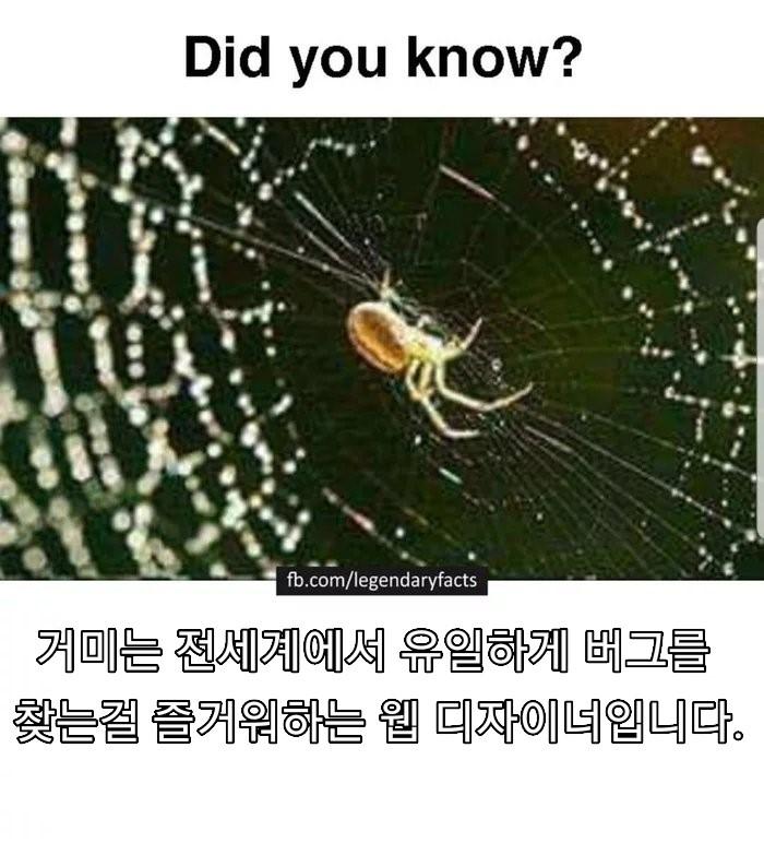 거미에대한 진실.jpg