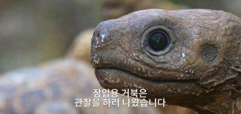 잠입용 거북의 비극1.jpg