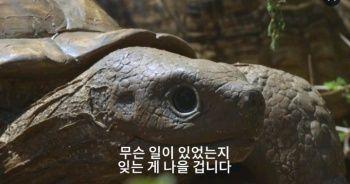 잠입용 거북의 비극4.jpg