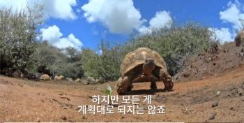 잠입용 거북의 비극2.jpg