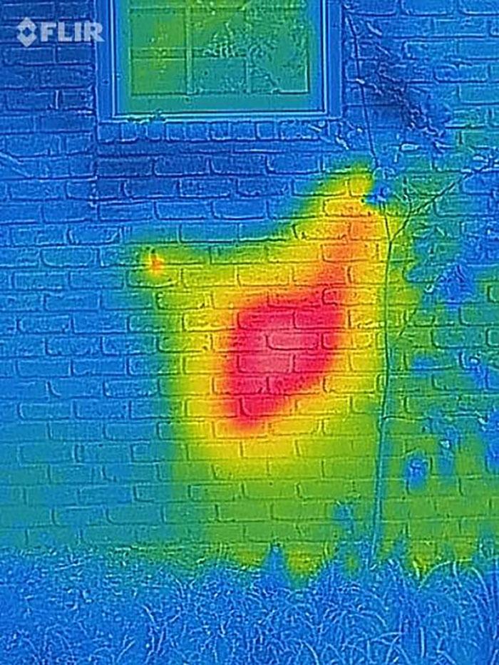 가정집 벽에서 발견된 엄청난 크기의 벌집2.jpg