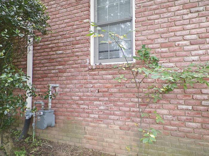 가정집 벽에서 발견된 엄청난 크기의 벌집1.jpg