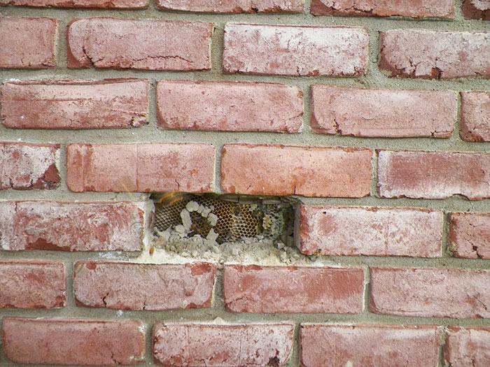 가정집 벽에서 발견된 엄청난 크기의 벌집3.jpg