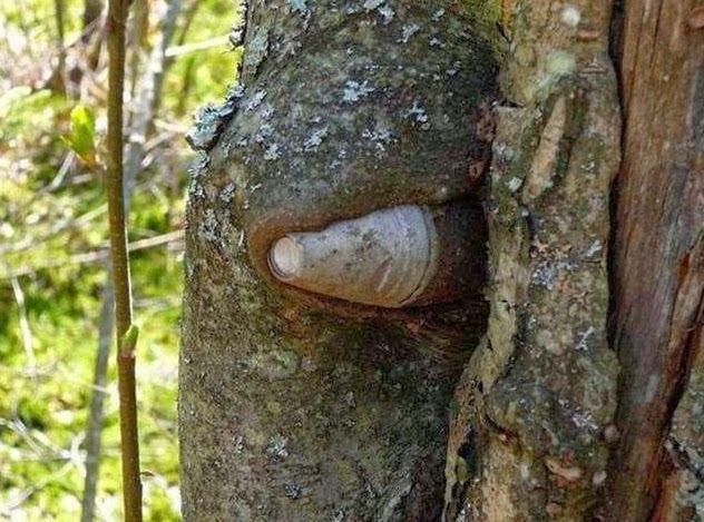 전쟁을 삼킨 나무들4.jpg