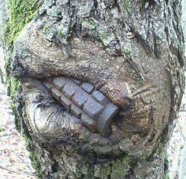 전쟁을 삼킨 나무들.jpg